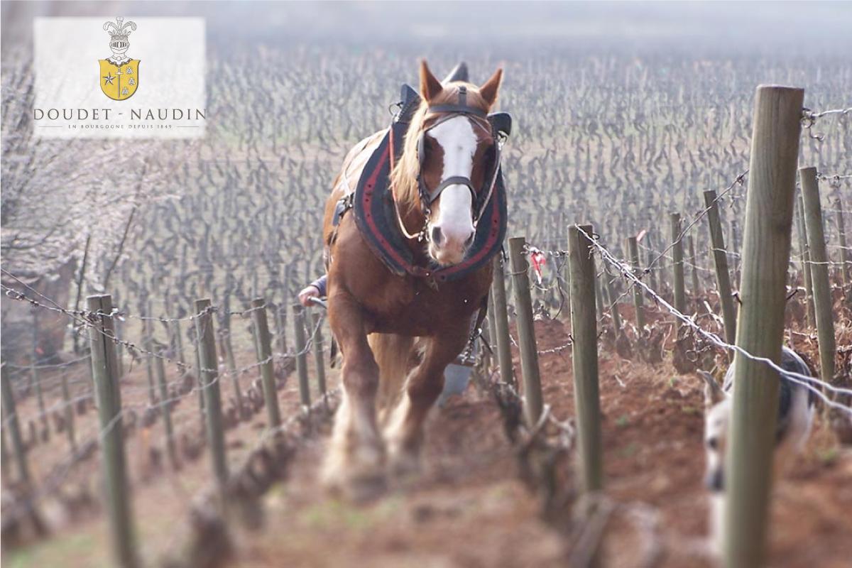 1849年にサヴィニー・レ・ボーヌに設立された歴史あるワイナリーで、ブルゴーニュで最も古いワイナリーの一つ。